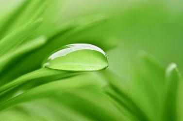 Bild mit Natur, Grün, Blätter, Makroaufnahme, Makro, Blatt, Wassertropfen, Regentropfen, Tropfen