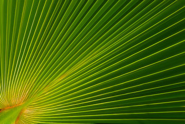 Bild mit Pflanzen, Blumen, Sommer, Blätter, Palme, Blume, Pflanze, Blatt, Palmenblatt