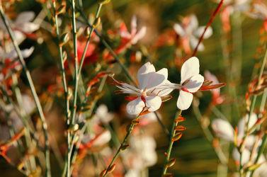 Bild mit Farben, Pflanzen, Jahreszeiten, Blumen, Herbst, Sonne, Blume, Gras, Flora, Wildblumen, garten, blüte, Jahreszeit, herbstfarben