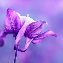 Bild mit Natur,Pflanzen,Blumen,Lila,Violett,Sommer,Blume,Pflanze,Flora,Blüten,blüte,detail,dekorativ