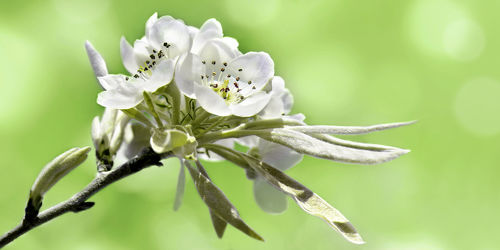 Bild mit Pflanzen, Jahreszeiten, Blumen, Frühling, Blume, Pflanze, Flora, Zweig