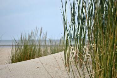 Bild mit Strände, Sand, Strand, Sandstrand, Düne, Dünen, Dünengras, Küste, Wellness, maritimes, Strandhafer, Traum