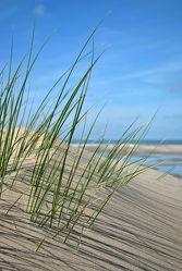 Strandhafer-Schattenspiel
