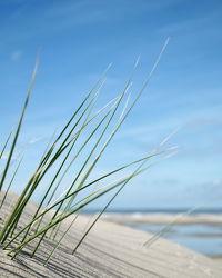 Strandgras-Schattenspiel