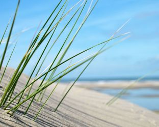 Bild mit Natur,Wasser,Landschaften,Seen,Strände,Sonnenuntergang,Sonnenaufgang,Strand,Sandstrand,Ostsee,Meer,Düne,Dünen,Dünengras,See,Strandhafer