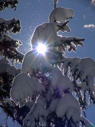 Bild mit Winter