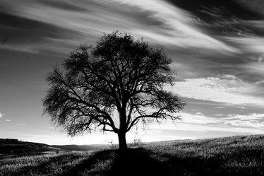 Bild mit Bäume, Sonnenuntergang, Sonnenaufgang, Baum, Eiche, Landschaftsfotografie, schwarz weiß, alleinstehender Baum
