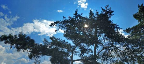 Sky Tree Panorama.jpg