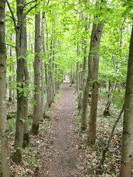 Bild mit Landschaften, Bäume, Wälder, Wald, Weg, Waldweg, Landschaft