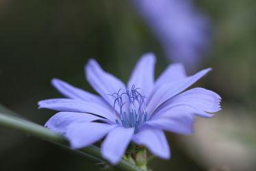 Blue Star Bild 0426