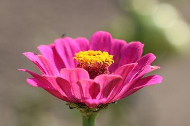 Gelbes Krönchen Bild 0436