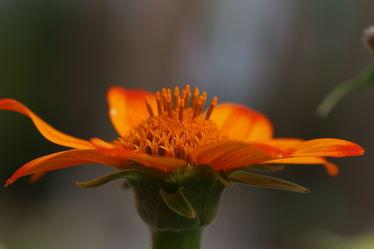 Bild mit Natur,Pflanzen,Blumen,Blume,Pflanze