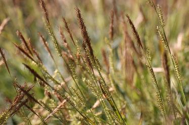 Bild mit Gräser, Blumen, Blume, Makro, Gras, Wiese, Feld, Felder, Blüten, Makroaufnahmen, blüte, Wiesen, Weide, Weiden, Blumenblüten, Blumenfeld, blumenfelder