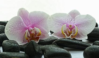 Bild mit Stein, Orchideen, Steine, gestapelte Steine, Orchidee, Meditation, Ruhe, Entspannung, Spirit, Wellness, Spa, Stille, Yoga, Relaxen, hippie, spiritualität