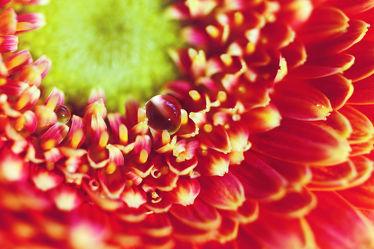 Bild mit Pflanzen, Blumen, Rot, Blume, Pflanze, Blüten, blüte
