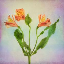 Bild mit Pflanzen, Blumen, Blume, Pflanze, Floral, Blüten, blüte, fleur