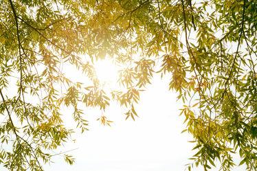 Bild mit Natur, Grün, Pflanzen, Blätter, Pflanze, Blatt, Strandpflanzen, fototapete, fototapeten