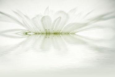 Bild mit Pflanzen, Blumen, Blume, Pflanze, Blüten, blüte, pastell