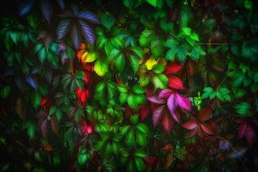 Bild mit Natur, Blätter, Blatt, Bunt, Elfen, Elfe, Blätterwald, Feenland, Elfenland, feen, fee