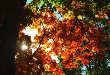 Bild mit Natur, Bäume, Herbst, Baum, Blätter, Sonnenlicht