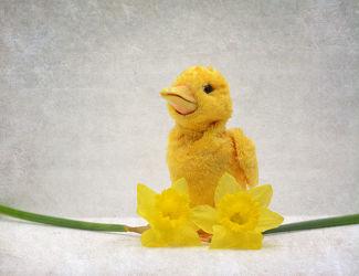 Bild mit Frühling, Stillleben, Ostern, frühjahr