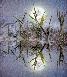 Bild mit Natur, Pflanzen, Gräser, Schilf, Pflanze, Gras, Schilfgras