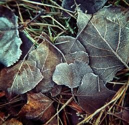 Bild mit Natur, Winter, Schnee, Eis, Wälder, Wald, Blätter, Waldboden, Blatt, Winterzeit, Frost, gefroren
