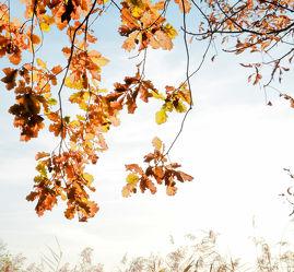 Bild mit Natur, Blätter