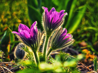 Bild mit Pflanzen, Blumen, Sonnenschein, Blume, Pflanze, Blüten, blüte, Blütenblätter
