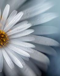 Bild mit Natur, Blume, Makro, Floral, Flora, Portrait