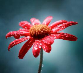 Bild mit Natur, Blume, Nature, Nature, Flower, Tropfen, Floral, Flora, farbig, color, pearls