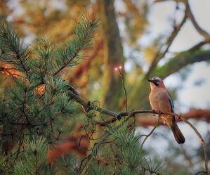 Bild mit Vögel, Baum, Nature, Ast
