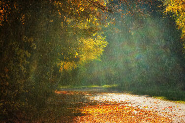 Bild mit Natur, Sonne, Blätter, Landschaft, Nature, Licht, Regen