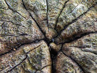 Bild mit Natur, Holz, Rotbraun, Braun, Baum, Holzstruktur, Hintergrund, Tree, Muster, Linien, grau