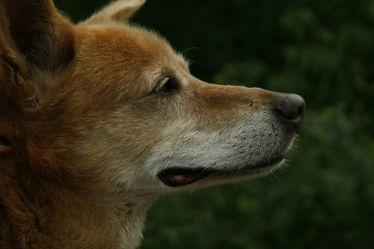 Bild mit Hunde, Hund, portraits, Animal