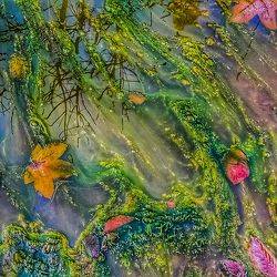 Bild mit Wasser, Grün, Lila, Abstrakt, Abstrakte Malerei, Herbstblätter, Elfen, Elfe, Feenland, Elfenland, feen, märchen, fee, pfützen, Pfütze