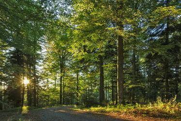 Bild mit Natur, Wald, Waldweg, Schönheit, Sonnenstrahlen, Sonnenlicht, romantisch, Abendsonne, schwarzwald, Bäume und Wälder