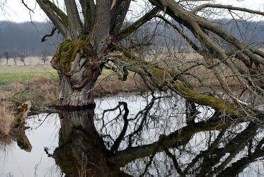 Knorriger Baum am Wasser mit Spiegelbild