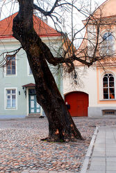 Schräger Baum im StraÃ?enpflaster