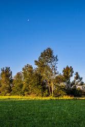 Bild mit Natur, Pflanzen, Landschaften, Bäume, Nadelbäume, Sommer, Sonnenaufgang, Wiese, Wiesengras, Reisefotografie, alleinstehender Baum