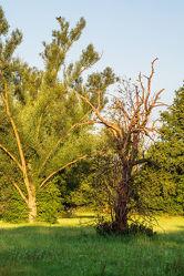 Bild mit Natur, Grün, Pflanzen, Himmel, Bäume, Sonnenaufgang, Landschaft, Wiese, Licht, Schatten, marode, Kreislauf, morgen, abgestorben, vergängliich