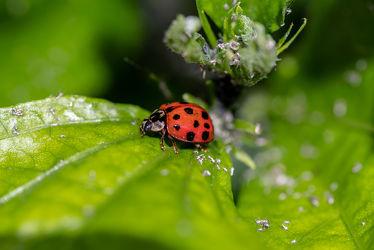 Bild mit Natur, Grün, Pflanzen, Frühling, Rot, Insekt, Käfer, Nützling, Mariechenkäfer, Biologie