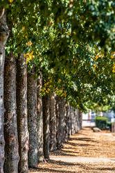 Bild mit Natur, Bäume, Jahreszeiten, Sommer, Wiese, Licht, Ruhe, Entspannung, Park, Allee, garten, Erholung, Schatten, Wachstum, Trockenheit, Gestaltung