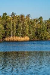 Bild mit Natur, Wasser, Bäume, Sonnenaufgang, Schilf, Wald, Licht, See, Ruhe, Entspannung, Erholung, Naturschutzgebiet, Schatten, Einsamkeit, Morgenlicht, Biotop, Reservat, Röhricht