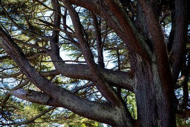 Bild mit Natur, Grün, Baum, Licht, Äste, Schatten, Zweige, Chile, Südamerika, verästelt, verwachsen, Verzweigungen, Astgabeln