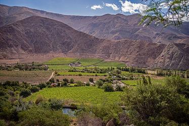 Weinbau im Elqui-Tal