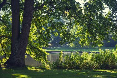 Bild mit Natur, Pflanzen, Licht, See, Ruhe, Entspannung, Park, Erholung, Relaxen, Schatten