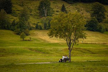 Bild mit Bäume, Wald, Waldweg, Feld, Ausflugsziel, Landschaften & Natur, familienbild, Grüne Farben