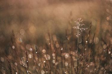 Bild mit Gräser, Makrofotografie, Makroaufnahme, Makro, Regentropfen, detailaufnahme, wiesengräser, leuchtende regentropfen, lichtzauber, magischer moment