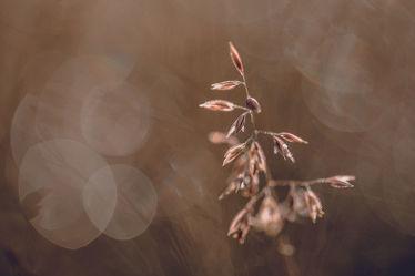 Bild mit Natur, Gräser, Makrofotografie, Makroaufnahme, Makro, Gras, Wiesengras, Landschaften & Natur, Natur pur, Natur Kunst Bilder, detailaufnahme, bokeh, magisches licht